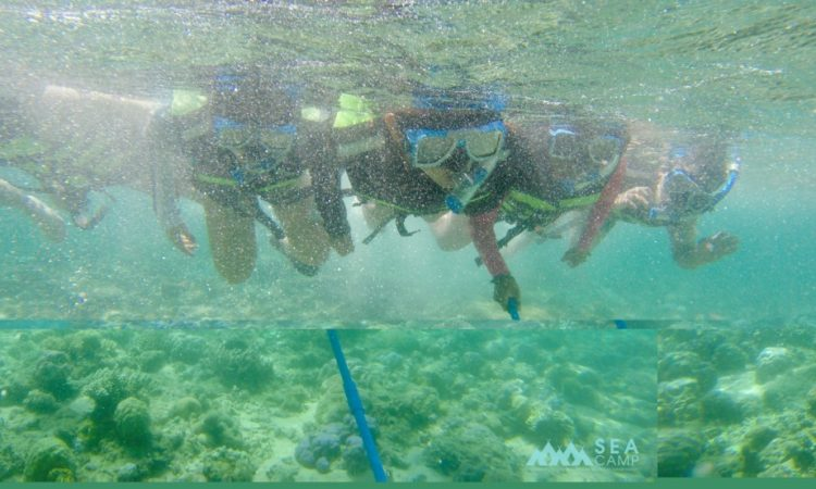 SEACamp participants learn about marine biodiversity at a USAID EcoFish project site in Siete Pecados, Coron, Palawan.